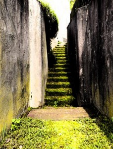 "Photo Art ""Green Stairway"" Gialombardo 2013"